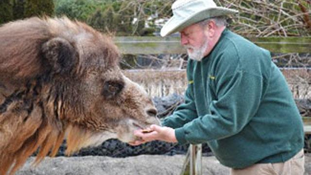 Clairvoyant Camel Predicts Baltimore Ravens to Win Super Bowl