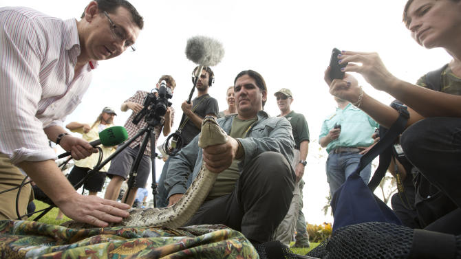 "TV crews pet and take photos as Capt. Jeff Fobb from the Miami-Dade Fire Rescue's Venom Response Unit, holds a python during the kick-off ceremonies for the Florida Fish and Wildlife Conservation Commission's month-long ""Python Challenge"" in Davie, Fla. on Saturday, Jan. 12, 2013. The 13-foot reptile was captured in a backyard swimming pool in 2012. (AP Photo/J Pat Carter)"