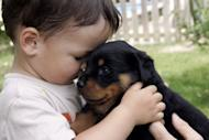 Babies who spend time around pet dogs have fewer ear infections and respiratory ailments than those whose homes are animal-free, said a study released on Monday