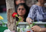 A woman touches a rose to a knot in a tree that people say looks like Our Lady of Guadalupe oN July 24, 2012 on Bergenline Avenue in West New York, New Jersey