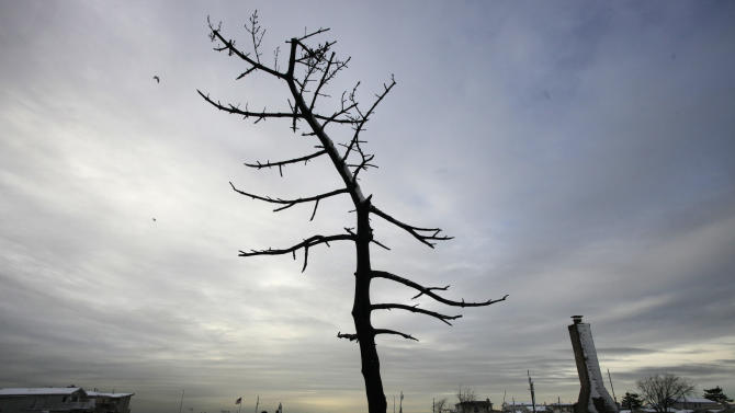 A  fire-scorched tree stands in the landscape of Breezy Point after a Nor'easter snow, Thursday, Nov. 8, 2012 in New York.  The beachfront neighborhood was devastated during Superstorm Sandy when a fire pushed by the raging winds destroyed many homes.  (AP Photo/Mark Lennihan)