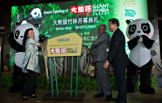 The Giant Panda Forest was officially launched on 28 Nov 2012 (Yahoo! Photos)