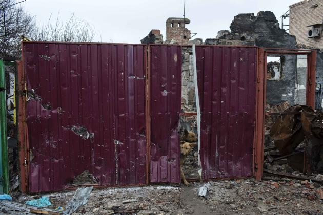 Stray dogs peek through a hole in a house fence in a destroyed residential area in Donetsk