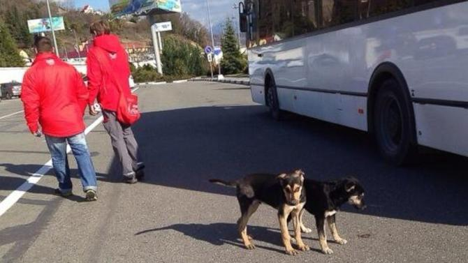 Latest Sightings: A Stray Dog of Sochi Hounds Skiers