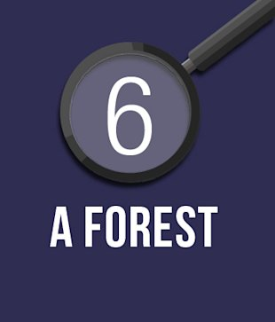 6. A Forest.