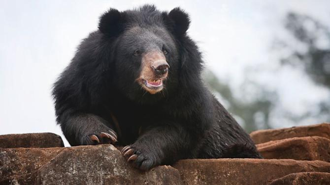 Man Recalls Escaping Mama Bear Attack With Only 1 Bite