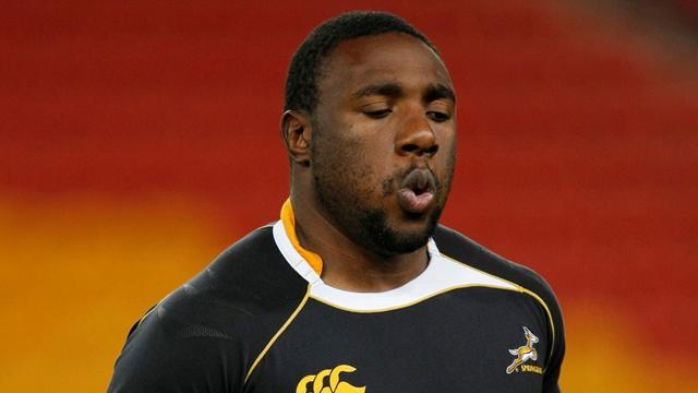 Rugby - Malherbe replaces 'Beast' in South Africa squad