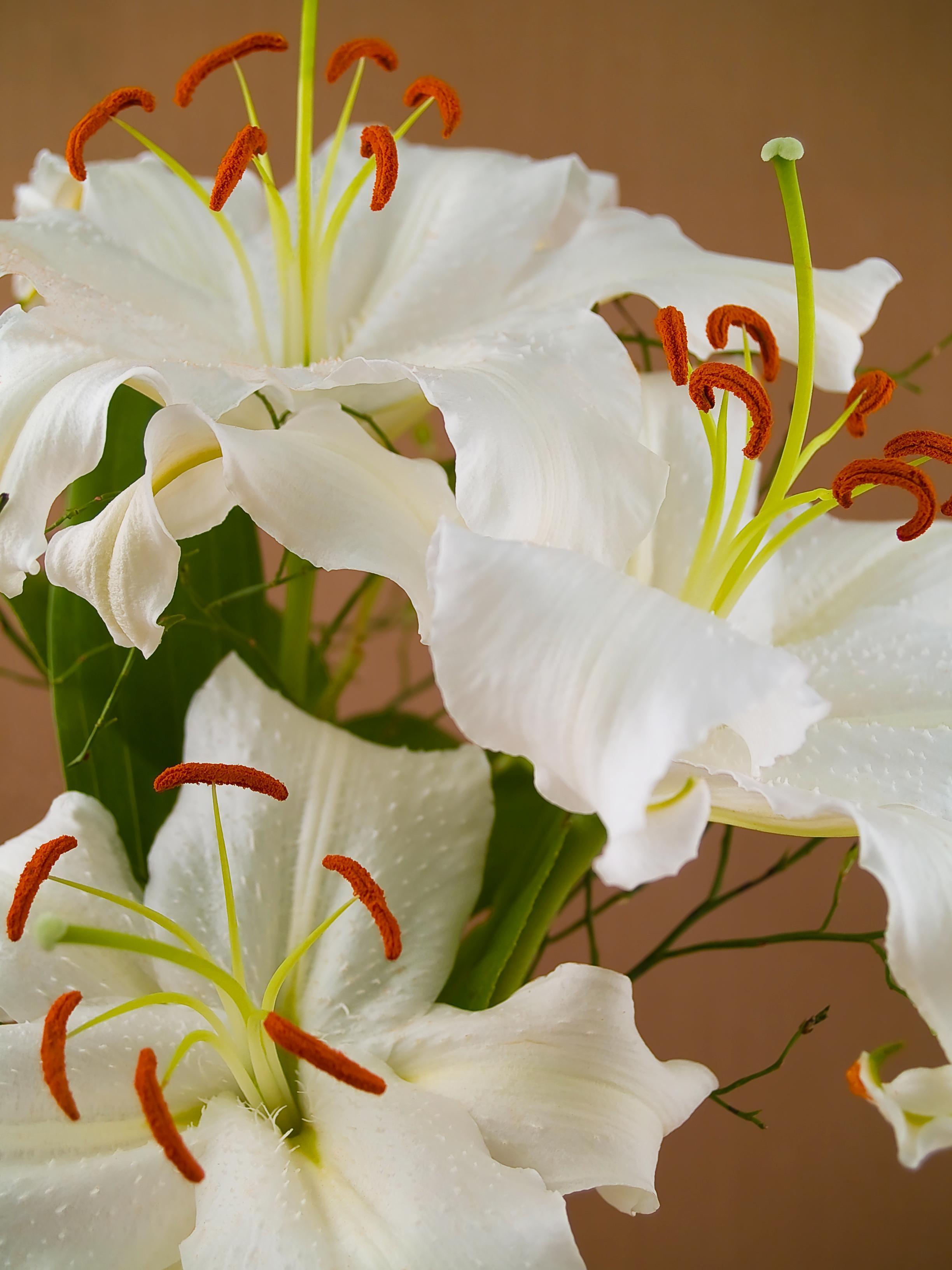 Meanings of Flowers Casa Blanca Lilies