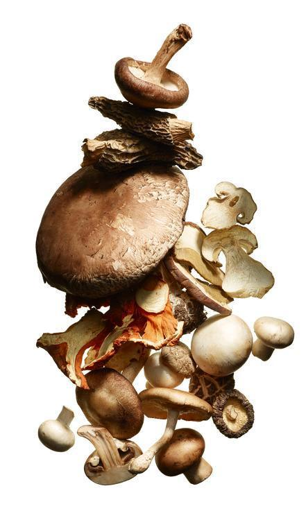Are Mushrooms the Next Miracle Skin Treatment?