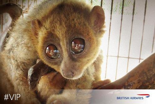 British Airways Gave This Adorable Animal a Second Chance at Life