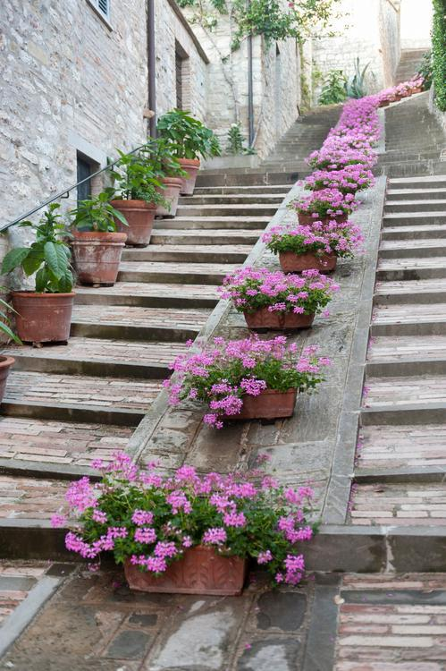 flowers in gubbio  secret italy