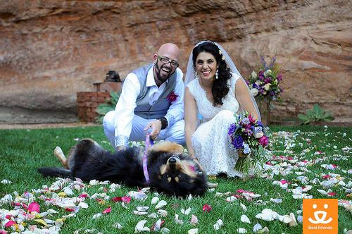 Places You Never Knew You Could Get Married Best Friends Animal Sanctuary Jackson Galaxy