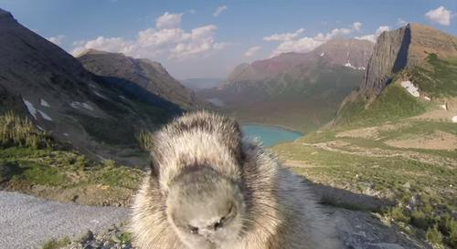 Curious Furry Creature Photobombs Time-Lapse Video at Glacier National Park