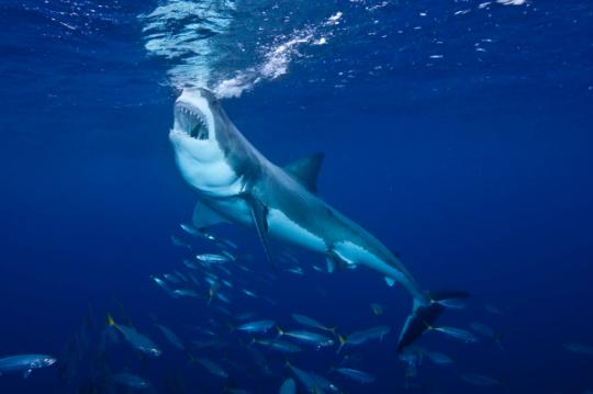 Photo: Shutterstock/Jim Agronick