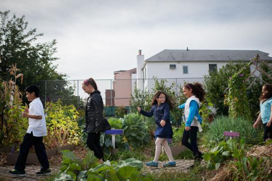 Kinder-Garden: Edible Schoolyard NYC Cultivates Young Minds