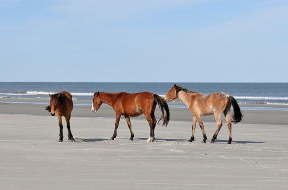 Cumberland Island Beaches, Georgia