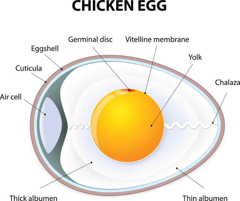 How To Boil an Egg: The Science, the Controversy, and the
