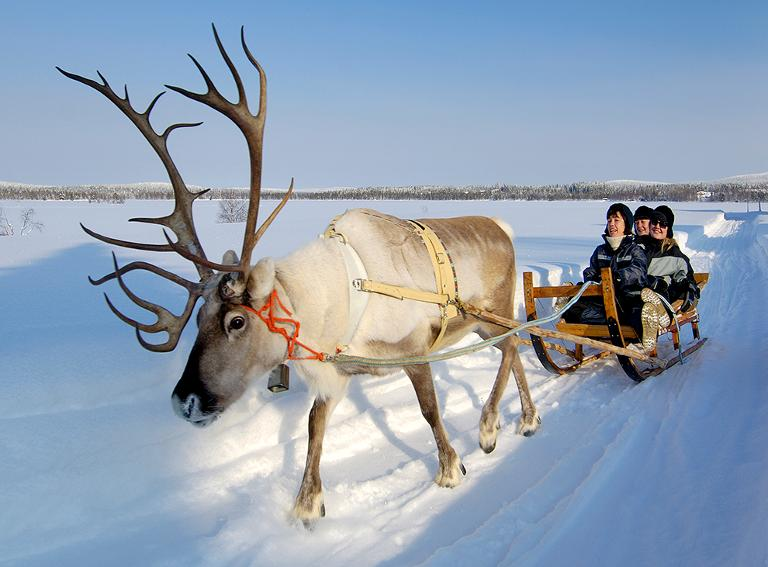 Reindeer Rides Snowy Festivals And Beach Must See Winter Adventures Of 2015