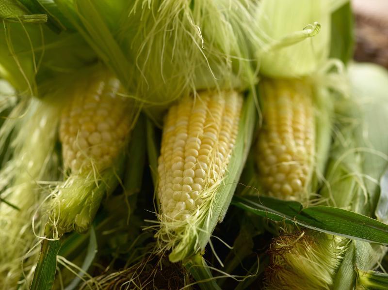 One Crack Trick to Get Silk Off Corn