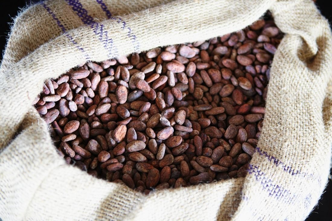 Cocoa Extract May Help Treat Alzheimer's