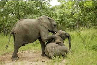 The Hangover: Africa - Elephants Gone Wild!