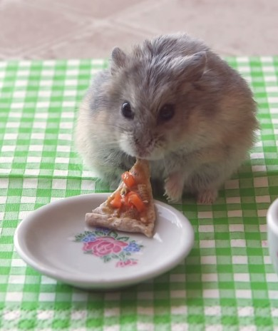 9 More YouTube Videos Starring Adorable Tiny Hamsters