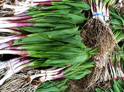 5 Easy Ways Cook With Ramps
