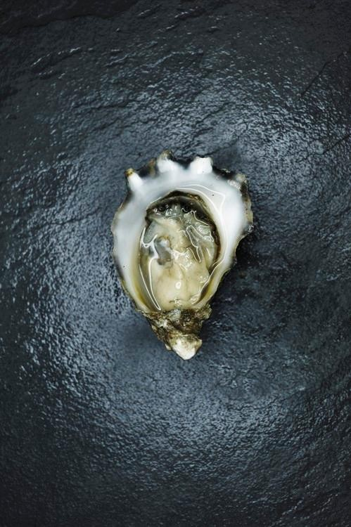 The Mexican Oyster That Could Change the Whole Game
