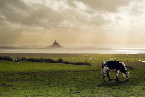 #Daydream: Mont St. Michel in Normandy, France
