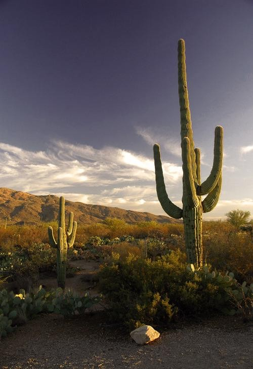#Daydream: Saguaro National Park