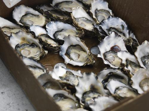 Oyster Fraud: The Restaurant Industry's Dirty Little Secret