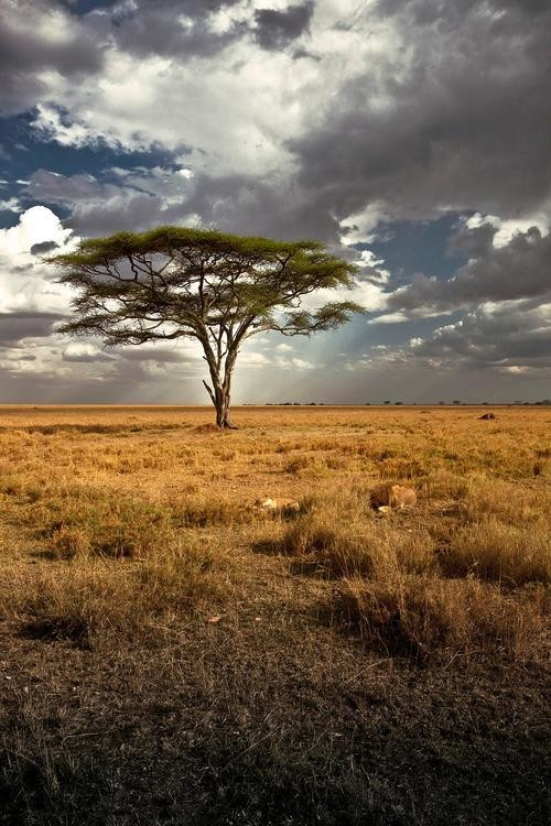 #Daydream: The Serengeti National Park