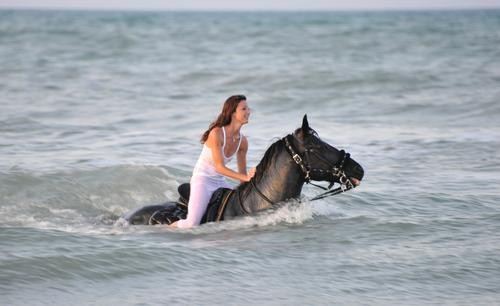 "My ""Black Stallion"" Moment: Swimming With Horses on Mustique"