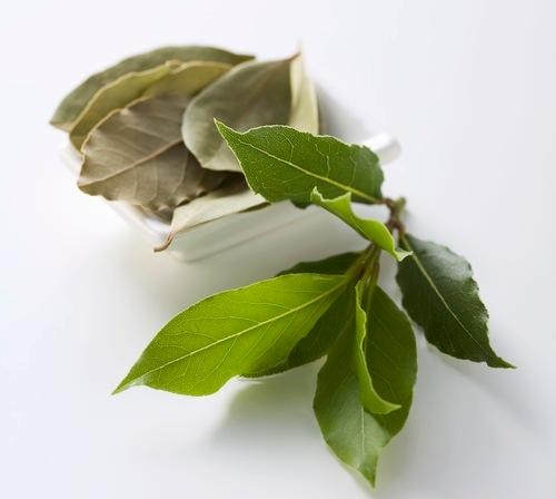 What's the Deal with... Bay Leaves