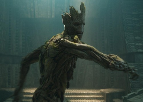 We Ask an Arborist How to Deal With Groot, Ents, and Other Famous Movie Trees