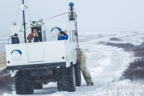 Polar Bears on Google Maps! Street View Comes to the Arctic