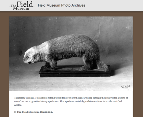 Tumblr of the Day: Field Museum Photo Archives