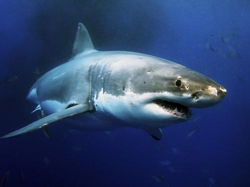 WATCH: The Top 10 Most Terrifying Shark Attacks... Ever!