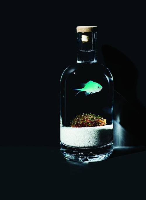 Welcome to the Age of Briny Booze