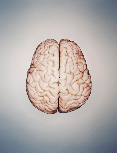 5 Brain Myths That Won't Go Away
