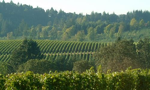 Road Trip: Searching the Willamette Valley for the Perfect Pinot