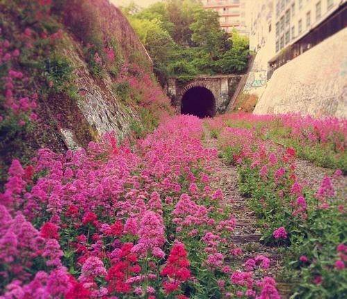 We Found These 5 Secret Gardens in Paris Just for You