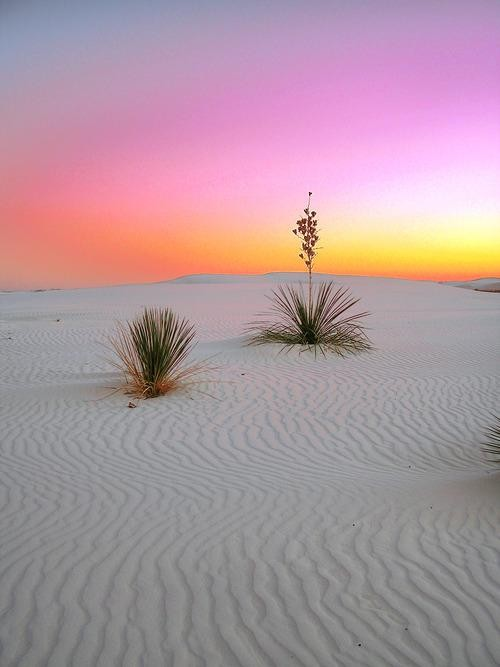 #Daydream: Sunrise in White Sands National Monument