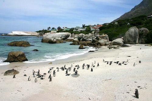 What is the Most Popular International Beach? (Hint: It Has Penguins)