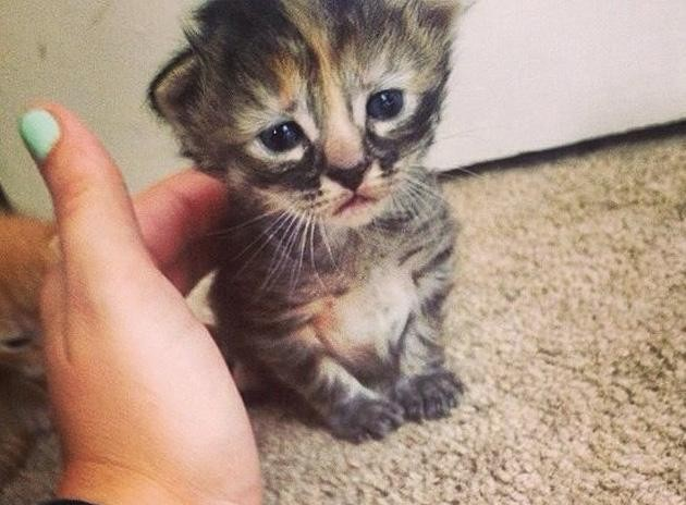 'Purrmanently Sad Cat' Might Be the Saddest Kitten on the Internet