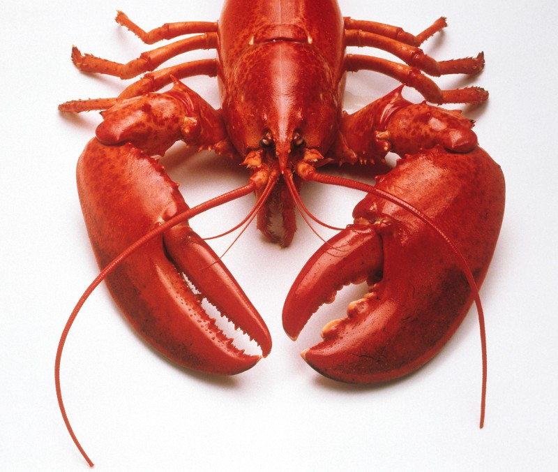 Could You Kill Your Own Lobster?