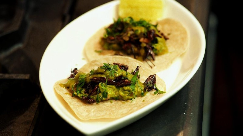 WATCH: Bugging Out. New York Goes Wild for Grasshopper Tacos