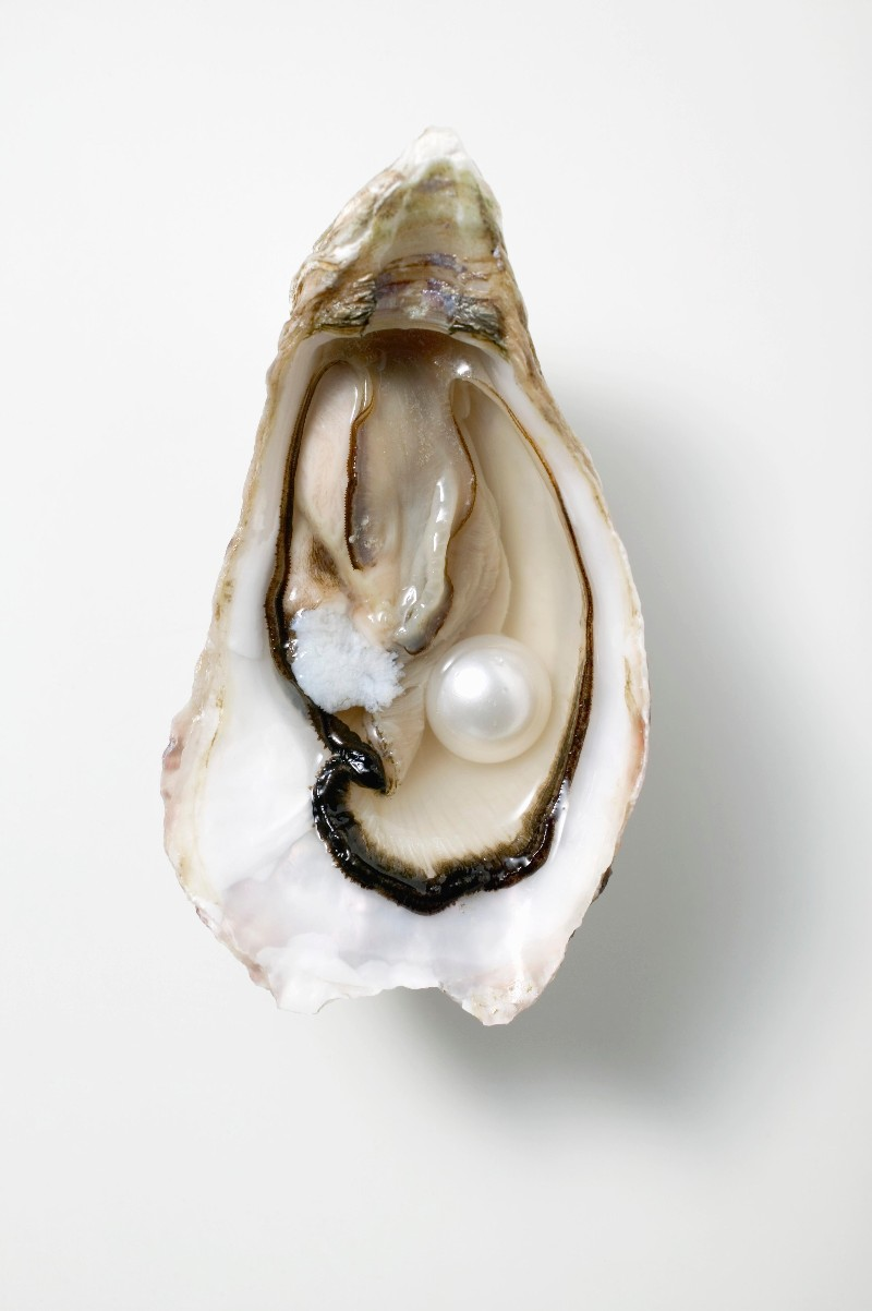 How an Oyster Makes a Pearl