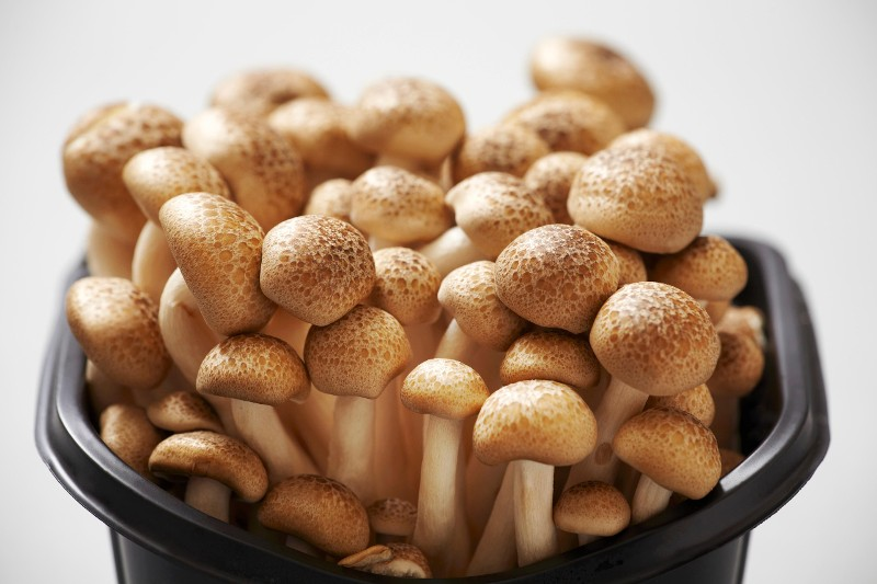 The Fast and Easy Way to Clean Mushrooms