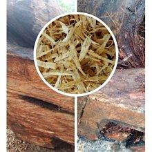 【油香世家】【出清感謝價】頂級黃檜純根12ml下標區 (扁柏 hinoki)檜木精油 牛樟精油 肖楠精油 山材